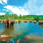 10 отличных причин посетить Шри Ланку