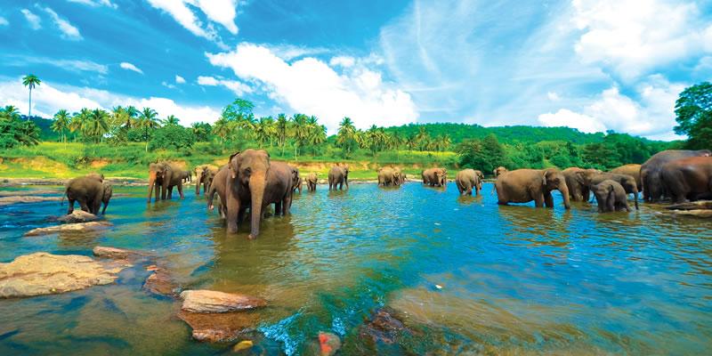 Шри Ланка слоники