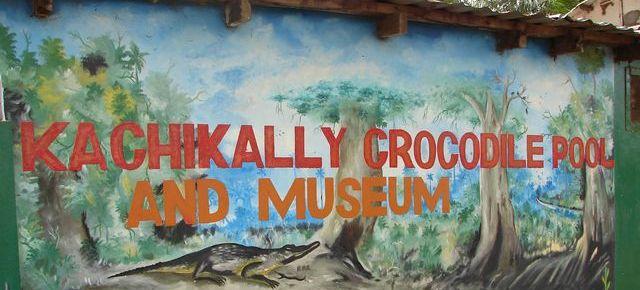 Крокодиловая ферма Гамбия